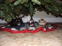 Ollie and Kit last Christmas